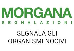 Morgana Segnalazioni